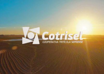 Cotrisel / 2017